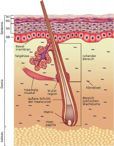 Beim Peeling werden die oberen Hautschichten entfernt um eingewachsenen Haaren vorzubeugen