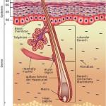 Aknenarben und Narben nach eingewachsenen Haaren entstehen in den tieferen Hautschichten